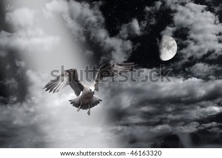flying sea gull in the night