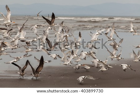 flying seabirds