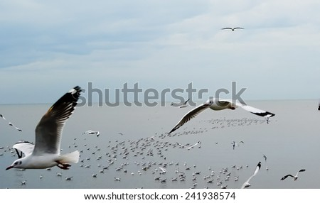 flying seafull bird - stock photo