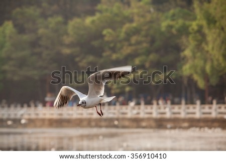 Flying seagull - stock photo