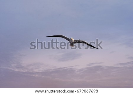 Flying seagull against a cloudy sky. Bird flies, sky background. White seagull flying in a dramatic sky