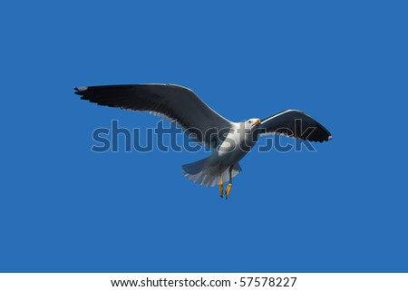flying seagull in blue sky - stock photo