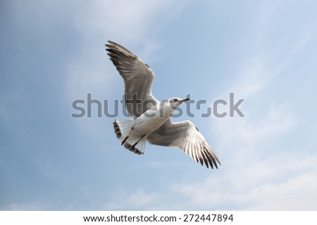 Flying seagull in sky
