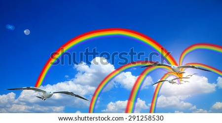 flying seagull in sky sun with clouds and rainbow.cloud blue sky background cloudy texture rainbow. - stock photo