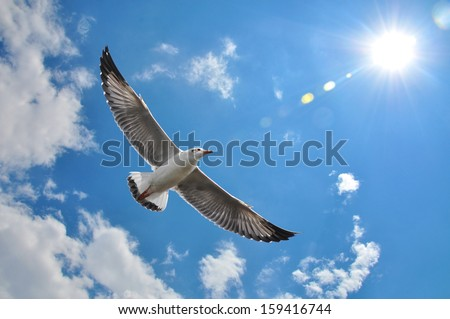 flying seagull in sky with clouds and bright sun - stock photo
