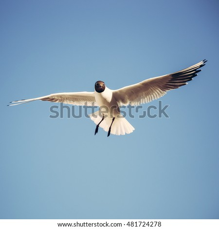 Flying seagull in the sky