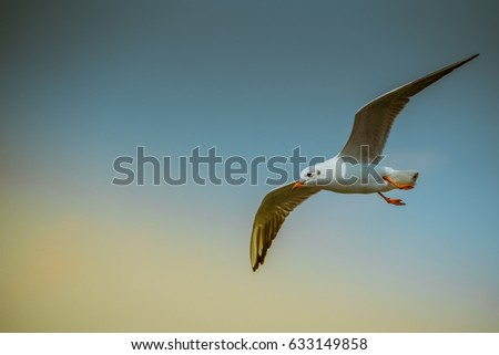 Flying seagull isolated on blue sky background