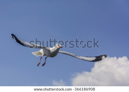 Flying seagull with blue sky - stock photo