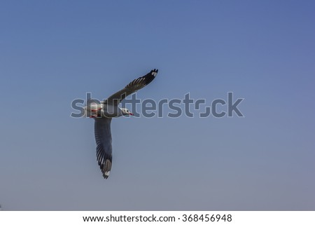 Flying seagull with clear blue sky - stock photo