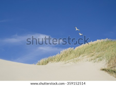 Flying seagulls above dune