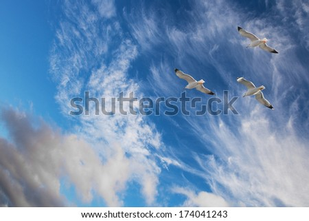 Flying seagulls against the blue sky with white clouds