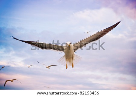 Flying seagulls in sunset sky - stock photo