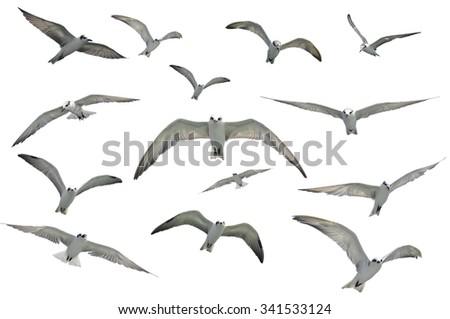 flying seagulls isolated on white background. - stock photo