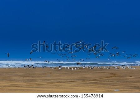 Flying seagulls on the beach at the ocean waves - stock photo