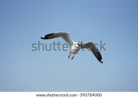 Flying seagulls over mud foreshore area - stock photo
