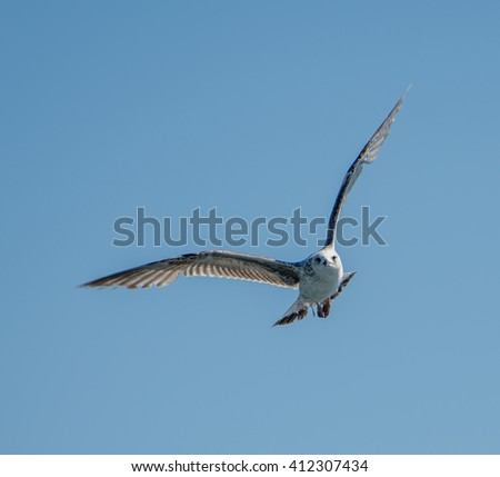 flying seagulls with blue sky backround