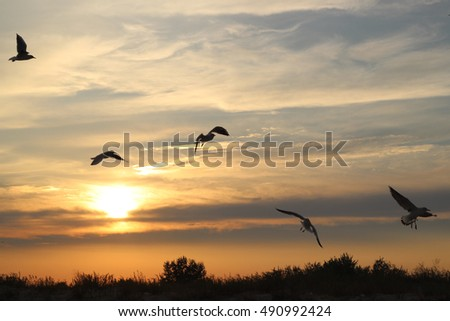 Flying silhouette bird seagulls on the sunset