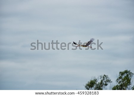 Flying Stork over the Forest. Cloudy Blue Sky.
