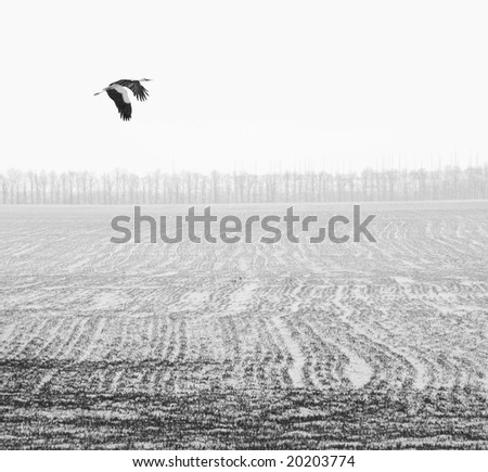 flying stork over the winter field - stock photo