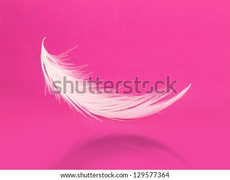 Flying white feather with shadow on pink background - stock photo