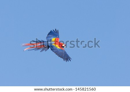 flying wild macaw parrot - stock photo