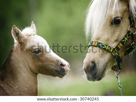 foal and it mother closeup on nature