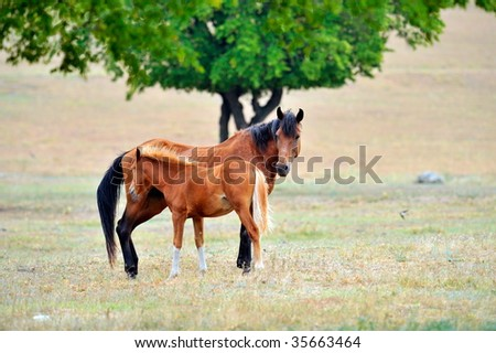 foal and mother horse on field in summer