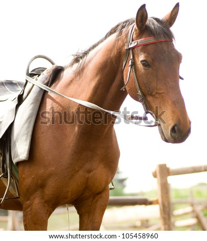 Foal brown horse - stock photo
