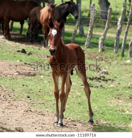Foal in front of a group of horses