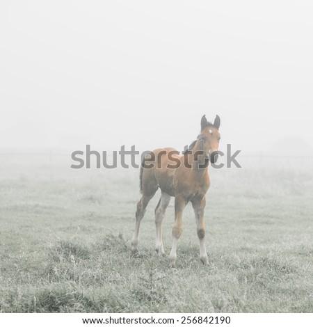 foal morning Meadow - stock photo