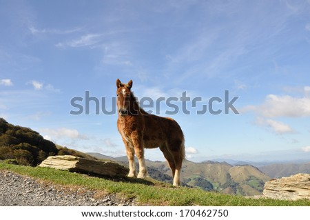Foal on a pasture,  Pyrenees - stock photo