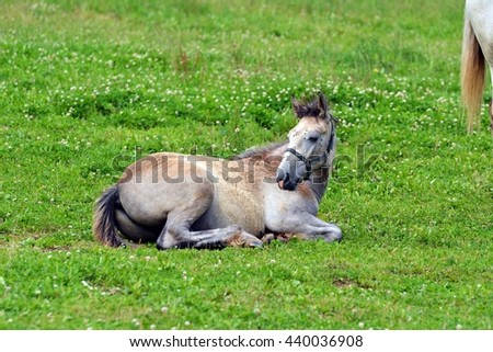 Foal on pasture - stock photo