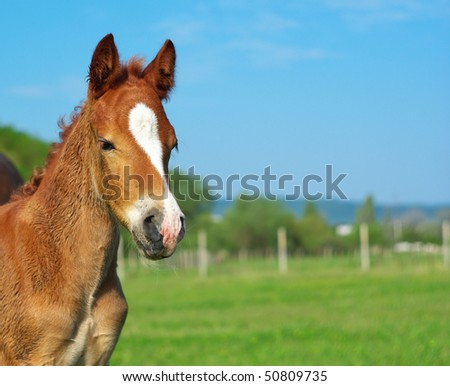 Foal on the meadow. Nature composition. - stock photo