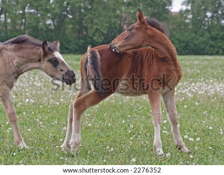 Foal play - stock photo