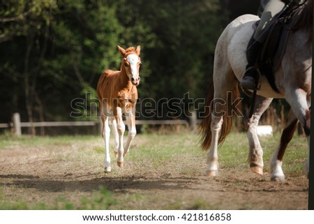 Foal playing in a meadow - stock photo