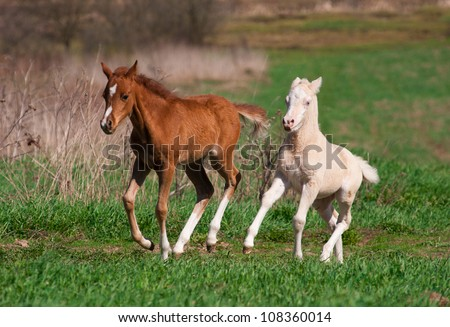 foals play - stock photo
