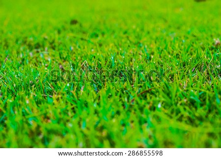 Focus Center : The green grass in garden in center city.Top view of grass,and background and texture of grass. - stock photo