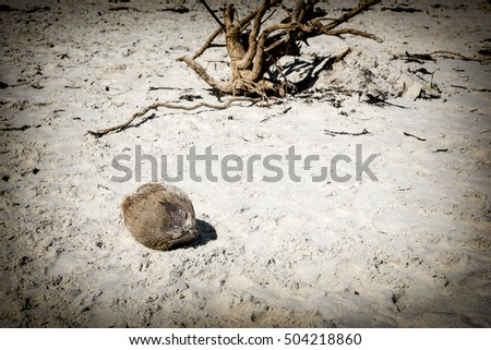 Focus on Lone Hairy coconut washed ashore with driftwood in the background