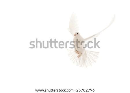 focus on the below of bird - stock photo