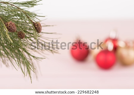 Focus on the fresh pine cones tree with red and gold Christmas baubles background  - stock photo