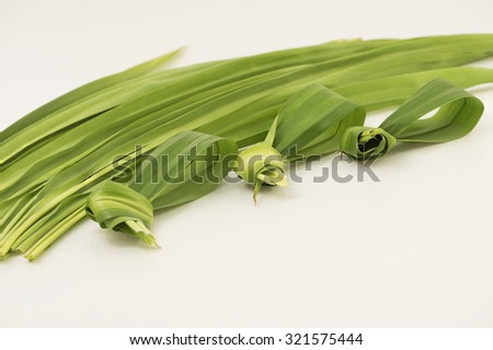 Focus on tied up in knot pandan leaves for easy remover after cooking, leaving the long leaves at the background blur. The leave have strong sweet fragrance and often used to scent and flavor food.  - stock photo
