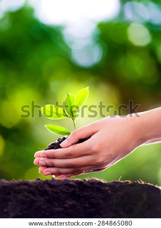 Focus on Young woman hand planting seedling into black soil with green bokeh effect. Earth day concept. - stock photo