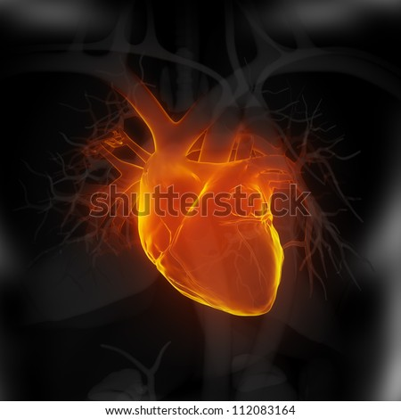 Focused on human heart     **** Also as footage available in my portfolio - stock photo