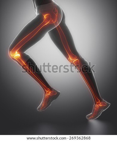 Focused on leg bones anatomy - stock photo