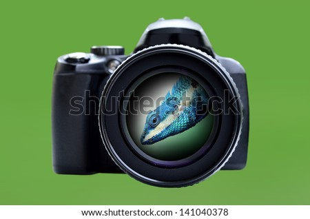 Focusing a monster lizard using the sharp lens and hi-end camera - stock photo