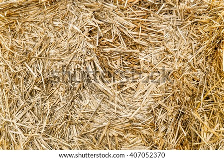 Fodder for livestock and construction material. - stock photo