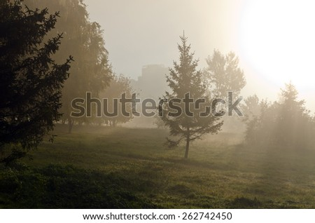 Fog above green grass and trees - stock photo