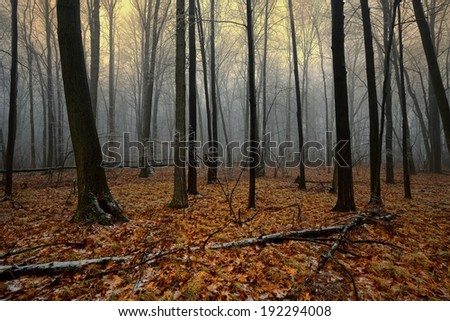 Foggy forest stock photos images pictures shutterstock