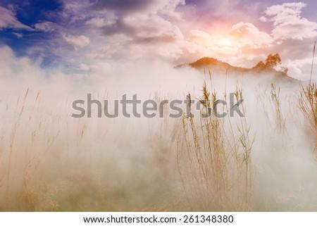 fog between grass - stock photo