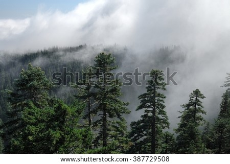 Fog cover the forest. Misty mountain view from Larch Mount. USA Pacific Northwest, Oregon. - stock photo